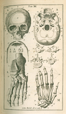 'The fore view of the skull' by Sutton Nicholls - print