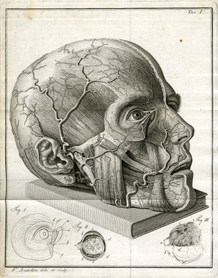 Human head and diagrams of the eye by Faustino Anderloni - print
