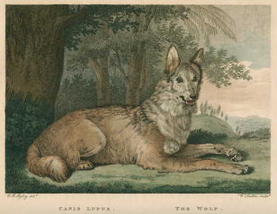 'The Wolf' by William Skelton - print