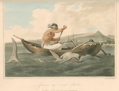 'Javanese and wounded Shark' by Thomas Medland - print