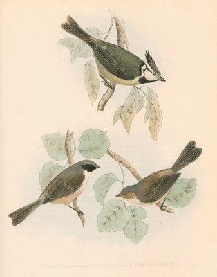 Studies of three birds by unknown - print