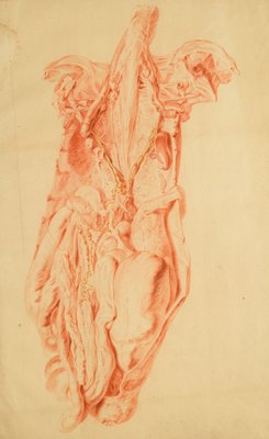 Anatomical study of the human torso by Jan van Rymsdyk - print