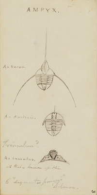 Ampyx, genus of trilobite by Henry James - print