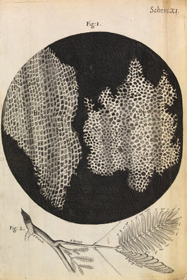 Microscopic view of cells in a sliver of cork by Robert Hooke - print
