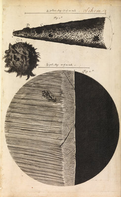 Microscopic views of the point of a needle; printed full-stop; edge of razor by Robert Hooke - print