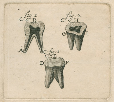 Microscopical observations of the structure of human teeth by Anonymous - print