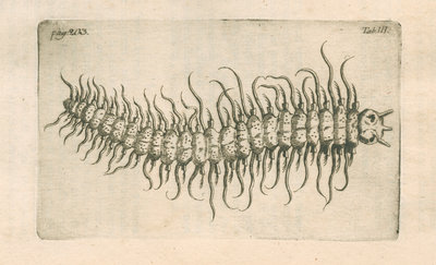 Marine plankton from Linnaeus's 'Academic delights' by Anonymous - print