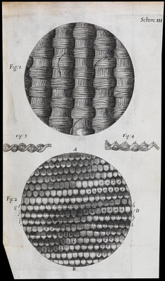 Microscopic view of silk and taffeta by Robert Hooke - print