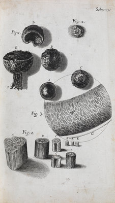 Microscopic view of hair and a shell by Robert Hooke - print