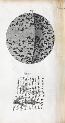 Microscopic views of charcoal by Robert Hooke - print