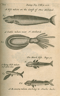 Marine life of Australia [New Holland] observed by William Dampier (1651-1715) by Anonymous - print