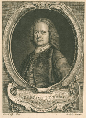 Portrait of George Edwards (1694-1773) by Johann Sebastian Müller - print