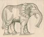 'Figure d'un Elephant' by unknown - print