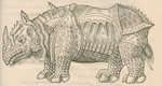 'Figure du Rhinoceros...' by unknown - print