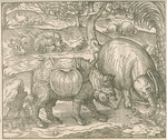 'Figure du combat du Rhinoceros contre l'Elephant' by unknown - print