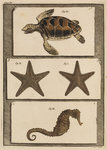 Three specimens of marine life by T Cole - print