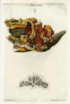 Yellow Copper Pyrites by Johann Michael Seligmann - print