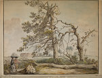 Damaged trees on an avenue to Barnes Common by Anonymous - print