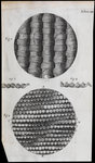 Microscopic view of silk and taffeta by unknown - print