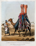 Camel Conveying a Bride to her Husband Fine Art Print by Carl Haag