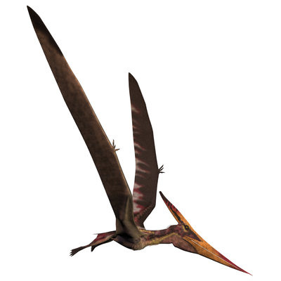 Pteranodon, a reptilian bird from the Late Cretaceous Period. Wall Art & Canvas Prints by Corey Ford