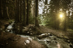 Small stream in a forest at sunset, Pirin National Park, Bulgaria. Wall Art & Canvas Prints by Tony Todd