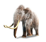 Woolly Mammoth, white background. Wall Art & Canvas Prints by Maylee Christie